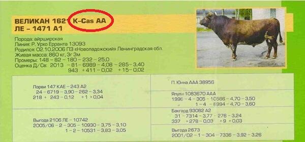 каталог быков-производителей