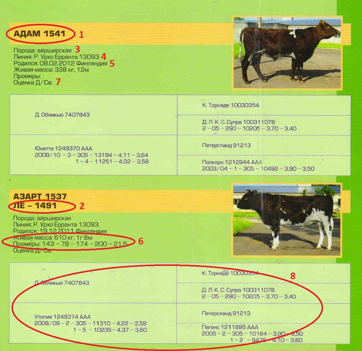 каталог быков производителей