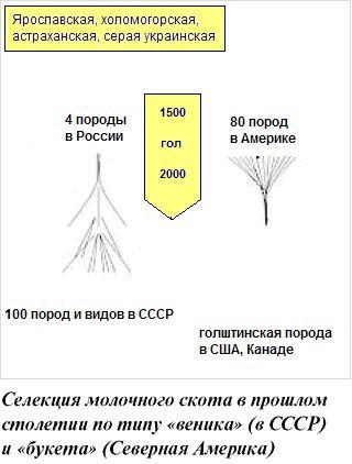 selektsiya-i-transplantatsiya