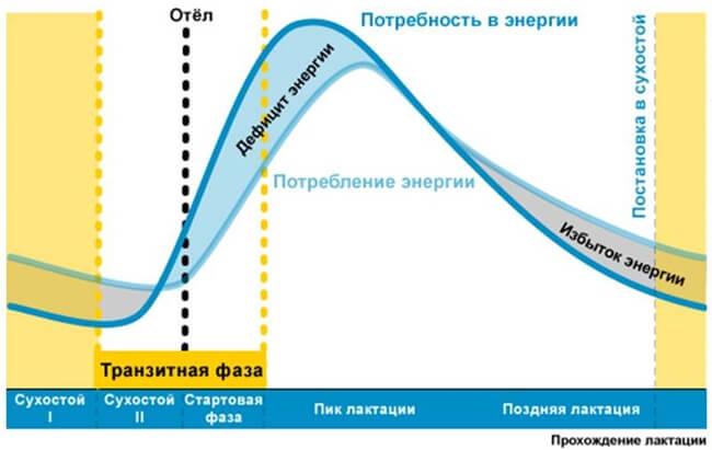 кривая энергии