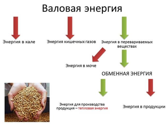 расход энергии корма