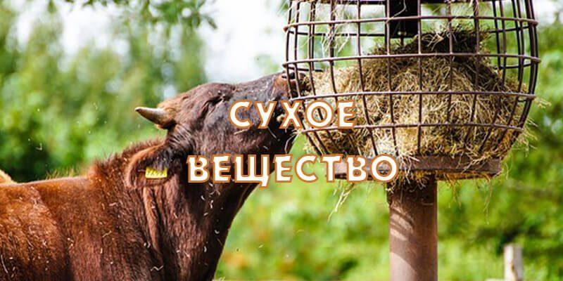 Кормление коров— сухое вещество
