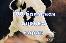 Линейная оценка экстерьера коров. 100-балльная оценка