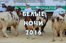 Выставка коров «Белые ночи— 2016»