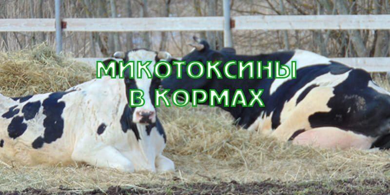 Микотоксины в кормах
