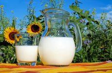 Антибиотики в молоке
