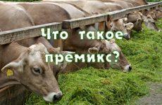 Кормовые добавки для коров
