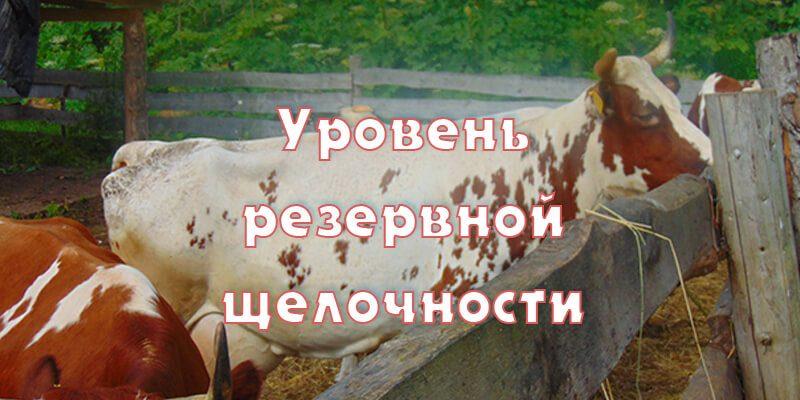 Резервная щелочность в крови у коров