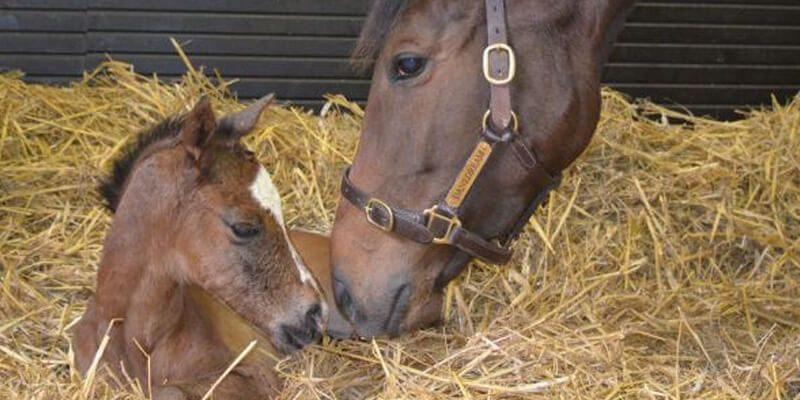 Роды лошади, случай из практики