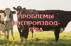 Проблемы воспроизводства стада в Ленинградской области