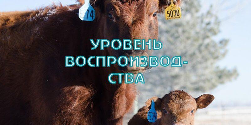 Воспроизводство стада. Реальный анализ