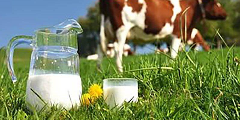 Полезно ли молоко?