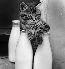 Дела молочные