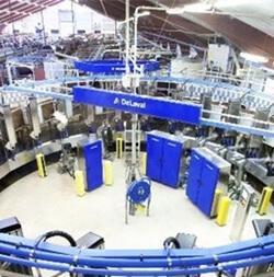 Инновации в молочном скотоводстве имеют место быть