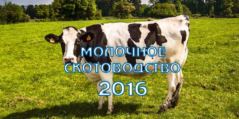 Молочное скотоводство в Ленинградской области. Итоги и приоритеты