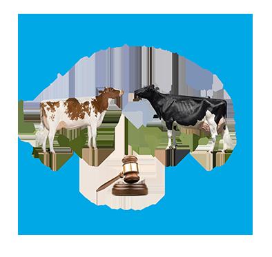 IV Аукцион племенных животных в Ленинградской области